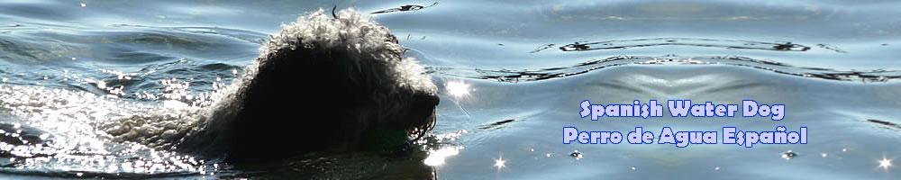 Perro de Agua 1