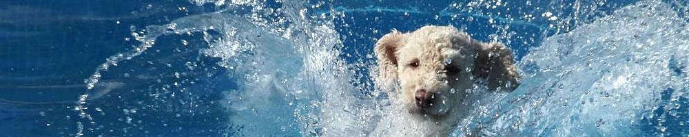 Perro de Agua 3