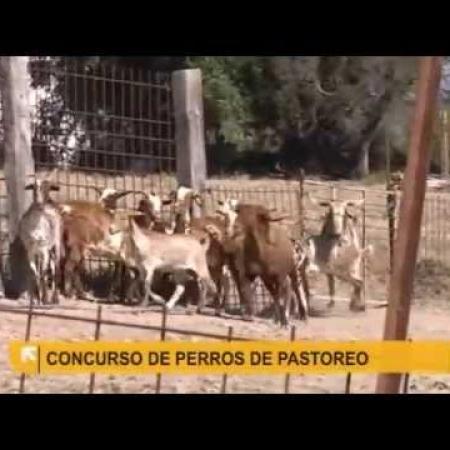 El perro de agua, pastor de cabras