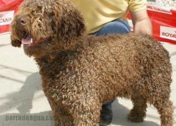 Bigorra del Morrúo, concurso canino de grazalema