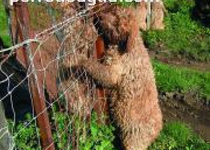 4 perros de agua ahorcados